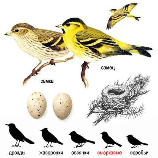 Летят перелётные птицы аккорды